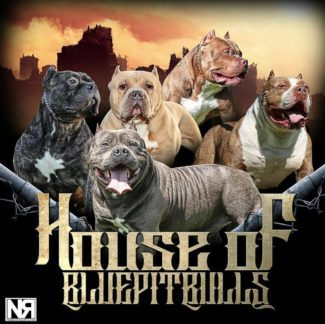 Welcome to House of Blue Pitbulls!